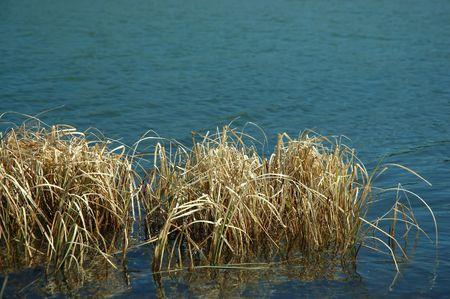 Reeds in the water Stock fotó - 434594