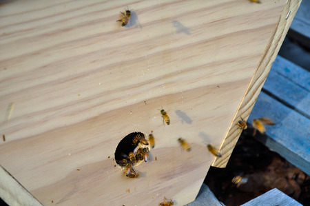 bar top: Bees with topbar hive