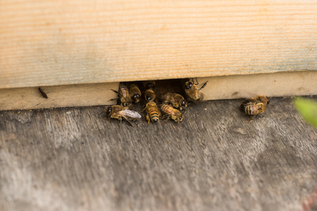 worker bees: Worker bees kick drones out of the hive