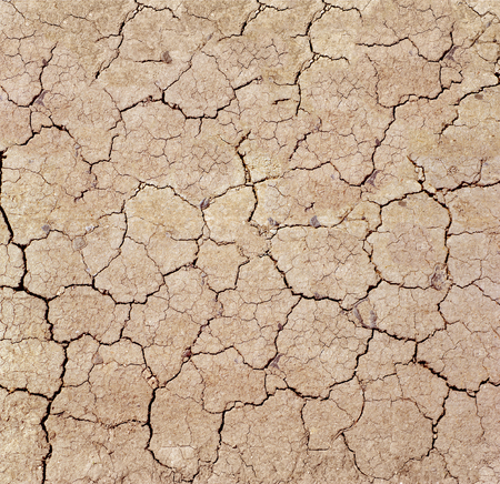 Dry cracks in dried out soil.