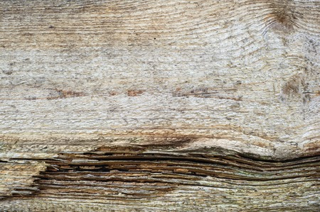 Wood texture. background old panels, texture of tree