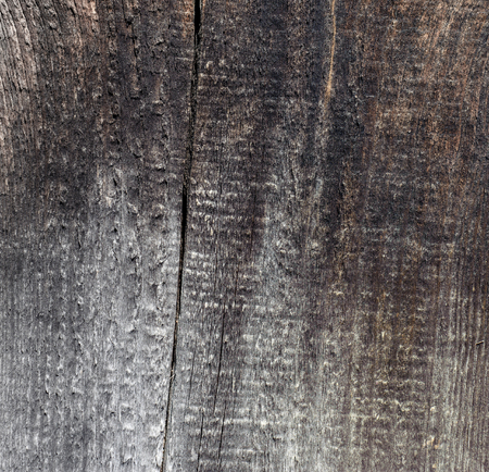 Old wood texture for background. Texture of tree, old panels