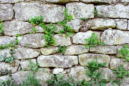 Grey stone wall background with green grass.