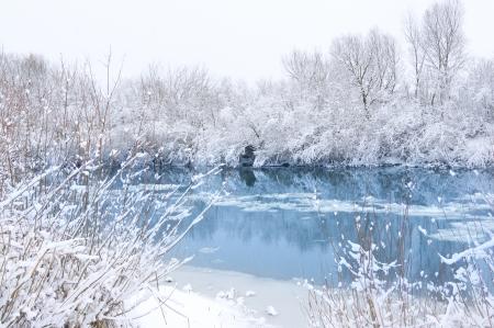 winter wonderland: Alberi paesaggio invernale coperto di neve