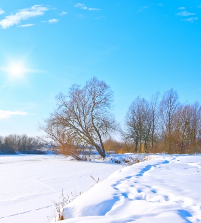 tree on the bank of a frozen river in sunny day Stock Photo - 15278578