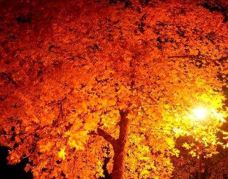 the streets lamp illuminate yellow leaves of tree at dark night photo
