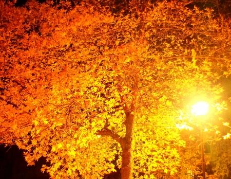 The street's lamp illuminate yellow leaves of tree at dark night Stock Photo - 15947253