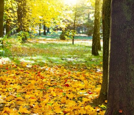 Sunbeams pour into the autumn park  Stock Photo - 17207561