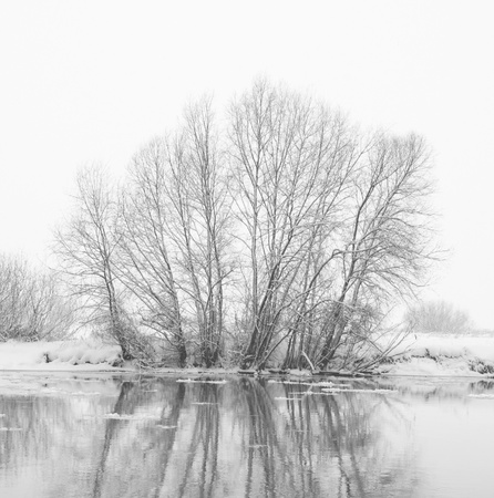 trees on the bank of the river in snowfall  photo