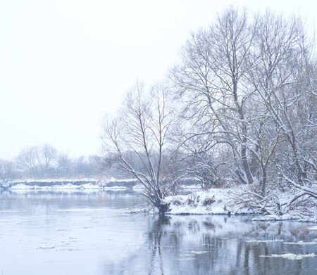 flurry: river and trees in winter season