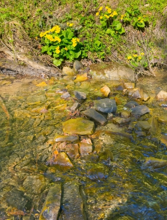 wild mountain brook in early spring Stock Photo - 17208407