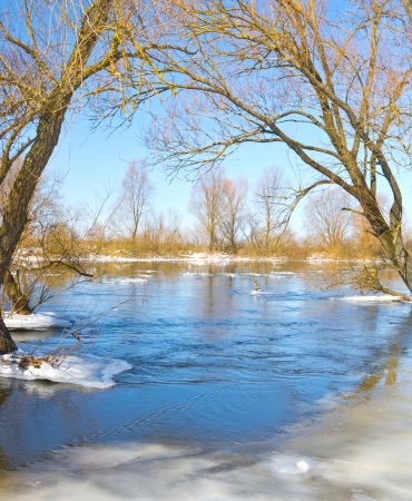 Frozen river and trees in spring photo