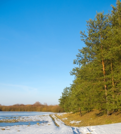 frozen river: Frozen river and trees in spring