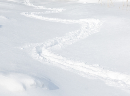 ski traces: Trace on the snow Stock Photo