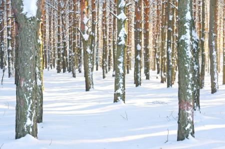 Stagione ? inverno foresta e l'inverno Archivio Fotografico - 20212695