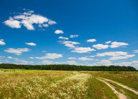 Summer flowering field photo