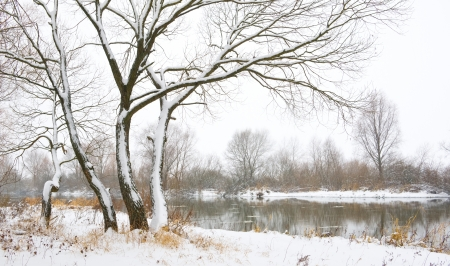 River and trees in winter season  photo