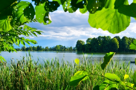 Green vegetation on lake photo