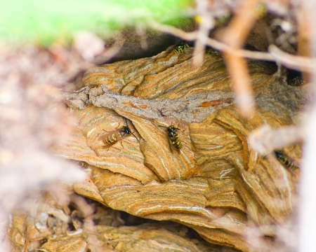 Wasps nest in the wild forest photo