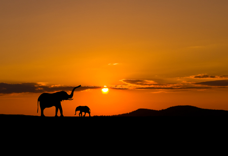 Elephants in African savannah at sunset