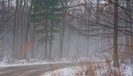 granizados: Aguanieve en el camino en el bosque de invierno