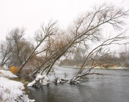 Trees leaned over the river in winter Archivio Fotografico - 96379176