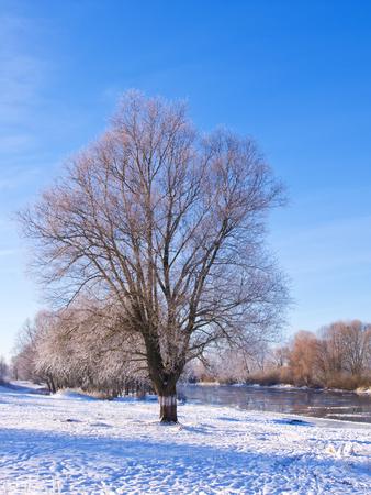 Frost on tree near river Archivio Fotografico - 96379205