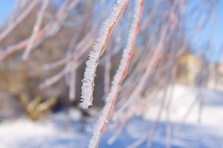 Frost on branch of tree in winter Archivio Fotografico - 96392823