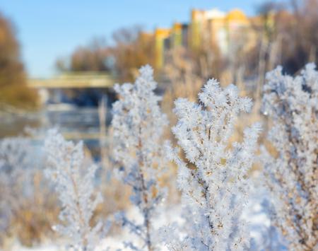 Frost on the grass in sunny winter day Archivio Fotografico - 96379177