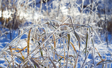 Frost on the grass in winter day Archivio Fotografico - 96392825