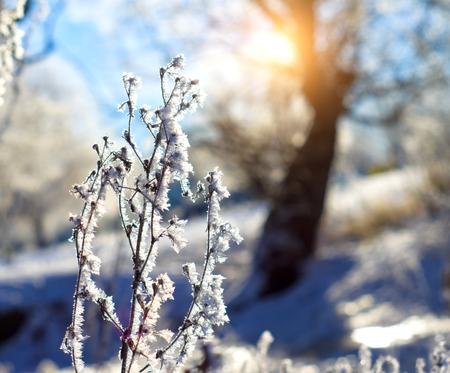 Frost on the grass in sunny winter day Archivio Fotografico - 96379178