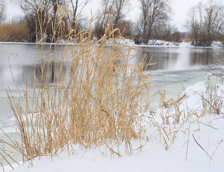 Yellow grass on winter river Archivio Fotografico - 96710170