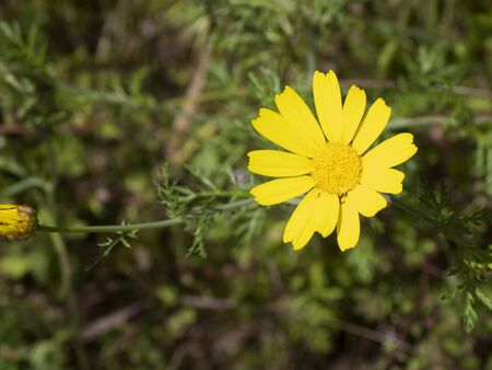 Walking in the morning on the country roads. A daisy illuminated by the midday sun on the background of the green lawn.