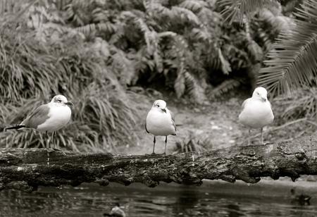 sea gulls Stockfoto