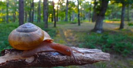 snail 스톡 콘텐츠