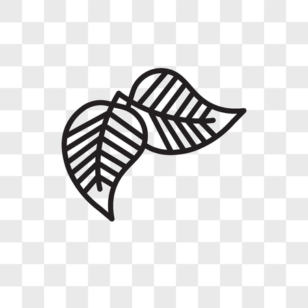 Birch leaf vector icon isolated on transparent background, Birch leaf logo concept Illustration