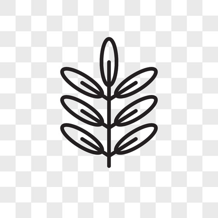Acacia vector icon isolated on transparent background, Acacia logo concept
