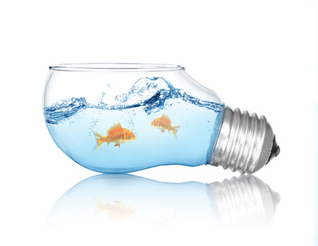 Gold fish in water inside an electric light bulb photo