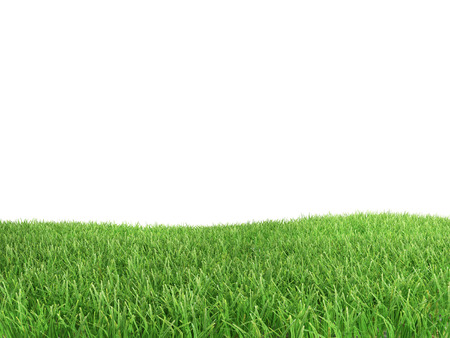 aislado: Pasto verde aislada sobre fondo blanco