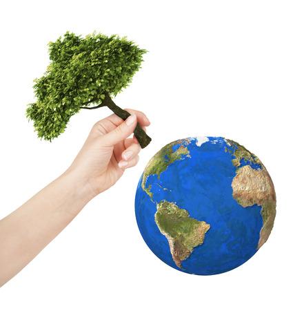 sembrando un arbol: Tierra mano plantar un �rbol en el planeta. Aislar en el fondo blanco Foto de archivo