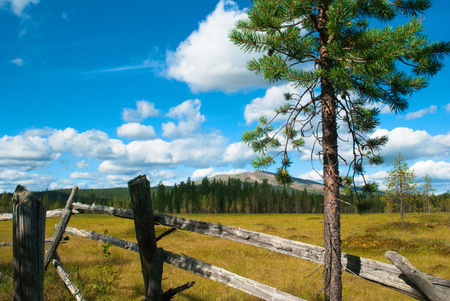 treetrunk: View of a forest bog. Lapland, Finland Stock Photo