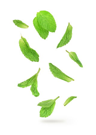 green mint leaves falling in the air isolated on white background Stock Photo