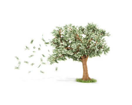 us money: dollar tree with hundred dollar bills and with wind Isolated over white Stock Photo