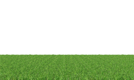 meadow grass: Green grass isolated on white background.