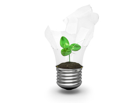 growing inside: clovers sprout growing inside the broken light bulbs