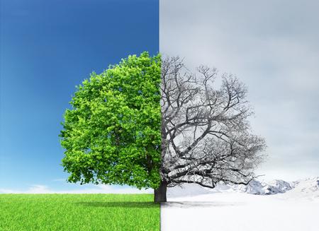 Concept van dubbelheid. Zomer en winter van verschillende kanten met boom in het centrum.