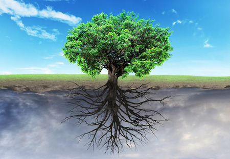 Concept of doubleness. Two worlds with horizon separated in center. Life tree at the half world, dead tree at another half. Religion.
