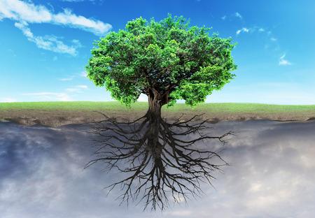 Concept van doubleness. Twee werelden met horizon gescheiden in het centrum. Boom van het leven op de halve wereld, dode boom op een andere helft. Godsdienst.