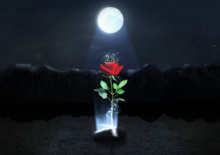 divinity: Magic Rose escapes from the soil on the mountains background below moonlight at night. Stock Photo