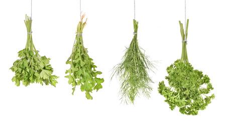 kitchen herbs isolated on white